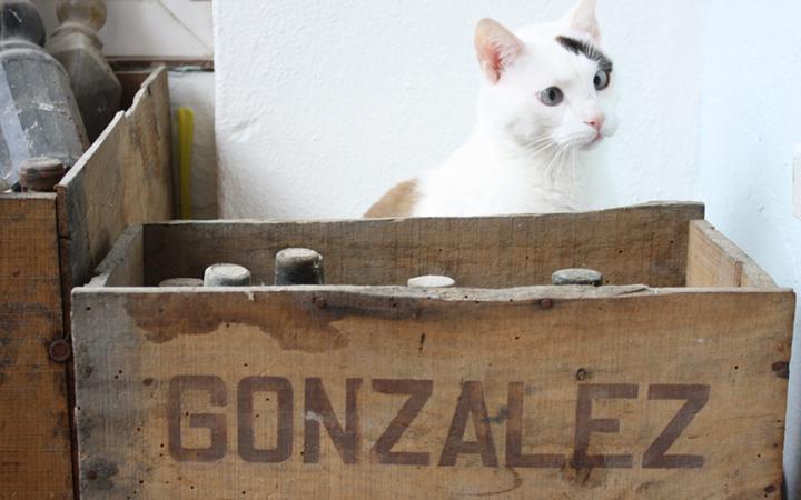 Hilos y madera: viejas cajas de vino y un gato